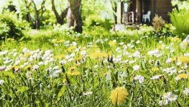 Ogród naturlany. Jeśli nie zniszczymy środowiska, w miejscu słonecznym zobaczymy łąkę pełną ziół
