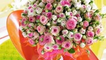 <b> KWIATOWY IMIENNIK. Mało kto wie, że niektórym osobom można wręczyć imieninowy kwiat noszący ich imię lub nazwę wyraźnie się z tym imieniem kojarzącą. My przygotowaliśmy taki zestaw dla osób świętujących w styczniu, ale warto zadać sobie nieco trudu i sprawdzić, czy solenizanci z innych miesięcy też mają swoich kwiatowych imienników. </b> <BR /> RÓŻA DLA ROZALII (27.01) I RÓŻY. Tu nie ma wątpliwości - imię pochodzi od kwiatu. To chyba najpopularniejszy całoroczny kwiat imieninowo-urodzinowy i ostatnio, walentynkowy. Możemy wybrać cięte lub miniaturkę w doniczce.