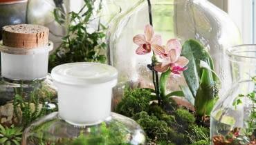 Begonie, miniogródek, aranżacja roślinna