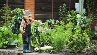 Podlewanie ogrodu to zadanie, którym można obarczyć już kilkuletniego ogrodnika.