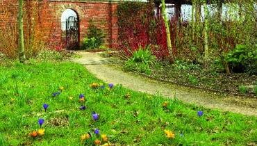 Kwitnący trawnik
