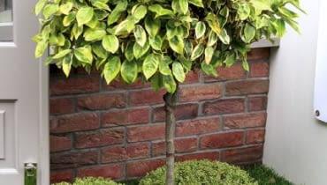 Fot. 2. Mała rabata wokół drzewa chroni przed uszkodzeniem pnia podczas koszenia