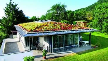 zieleń na dachu stromym