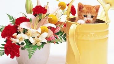 Konewka do podlewania kwiatów.