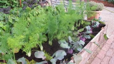 ogród, warzywnik, podniesiona rabata, podwyższona grządka