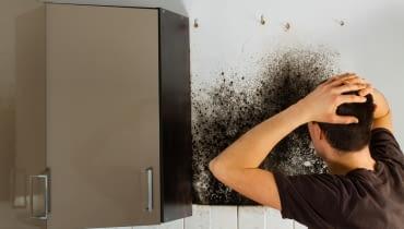 Jak usunąć zawilgocenia i grzyb?