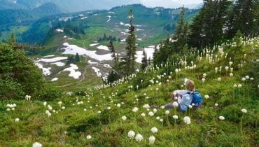 Łąki 'niedźwiedziej trawy' można podziwiać i w górach, i na nizinach od zachodniej Kanady po Kalifornię. Jej młodymi kwiatostanami żywią się m.in. niedźwiedzie, stąd popularna nazwa rośliny.