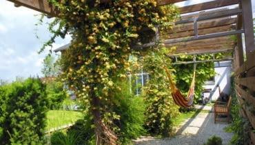 Cienisty pasaż pod dachem z pnączy - świetne rozwiązanie tam, gdzie brak miejsca na solidne drzewo. Na Nastrój tego ogrodu zbudowano na zasadzie kontrastu - tworzą go uporządkowane niskie partery z bukszpanu i swobodne 'słupy' pnączy, które zastępują drzewa