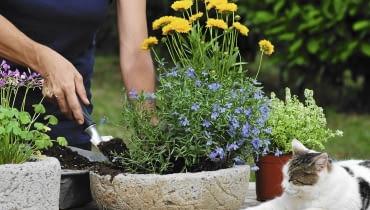 Latem warto dopasować kwiatową oprawę balkonu do pory roku - wystarczy do pojemnika z lobelią dosadzić kwitnące nachyłki i pachnące macierzanki.