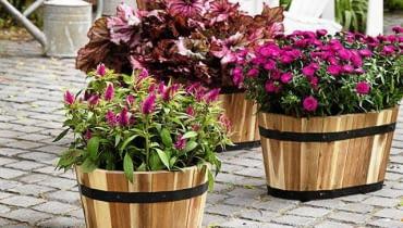 SLOWA KLUCZOWE: efterAYr autumn hAst herbst inspiration anregungen fd55 aster novi-belgii heuchera rosa pink