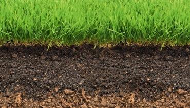 gleba, trawnik