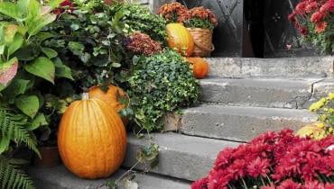 W listopadzie wciąż pięknie wyglądają dynie, wrzosy i chryzantemy. Warto nimi zdobić taras i balkon