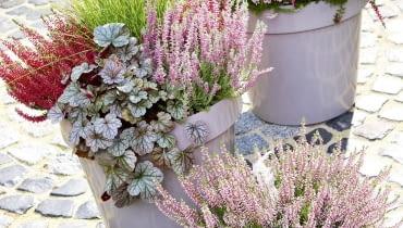 TRUDNO WYOBRAZIĆ sobie jesień bez wrzosów (Calluna). Wtej kompozycji zestawiono je zżurawkami (Heuchera) oozdobnych liściach ozdobnych liściach iefektowną trawą rozplenicą.