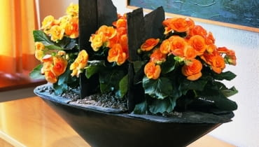 Ktore Rosliny Cebulowe Nalezy Wykopac Jesienia Z Ogrodu Jak Przechowywac Rosliny Cebulowe Zima E Ogrody Rosliny