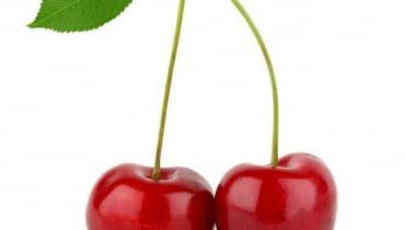 Wiśnia. Aby drzewo owocowało, musi być dobrze odżywione