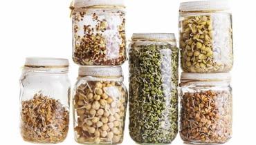 Kiełki, pszenica, ciecierzyca, zielona soczewica, czerwona soczewica, żółta soczewica, rzodkiewka