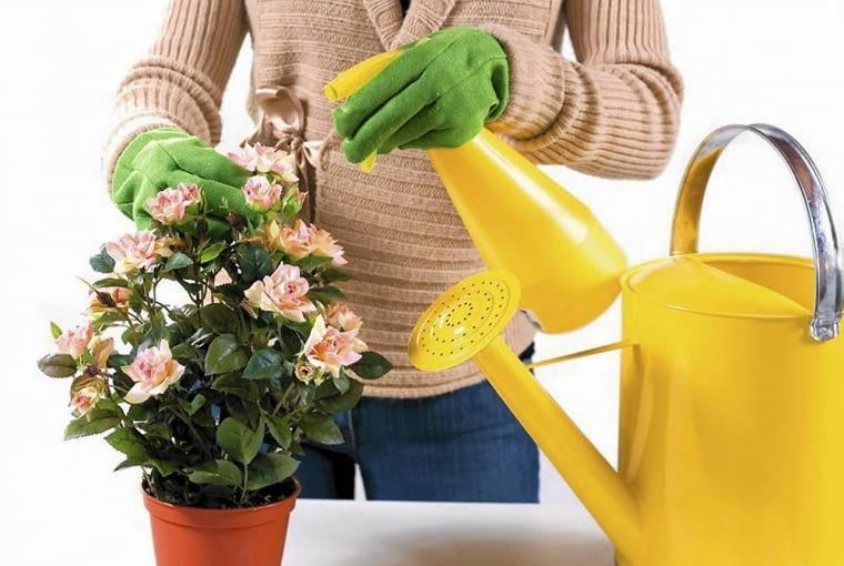 Kwiaty doniczkowe zraszamy - zwłaszcza jeśli grzeją kaoryfery