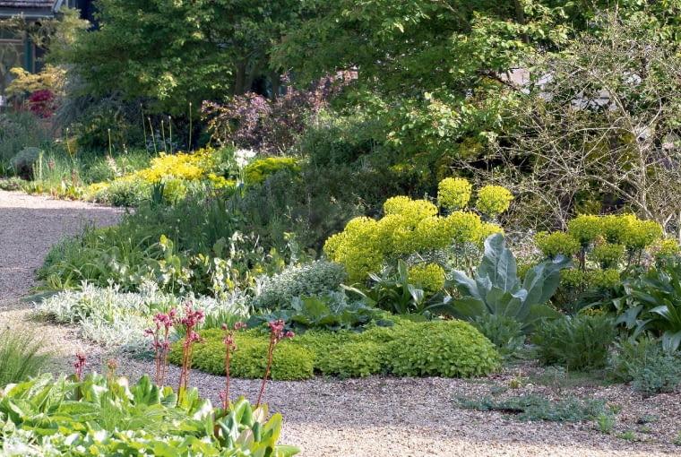 Imponujące wilczomlecze (Euphorbia wulfenii) - wkolekcji Beth Chatto jest wiele gatunków zobszarów śródziemnomorskich.