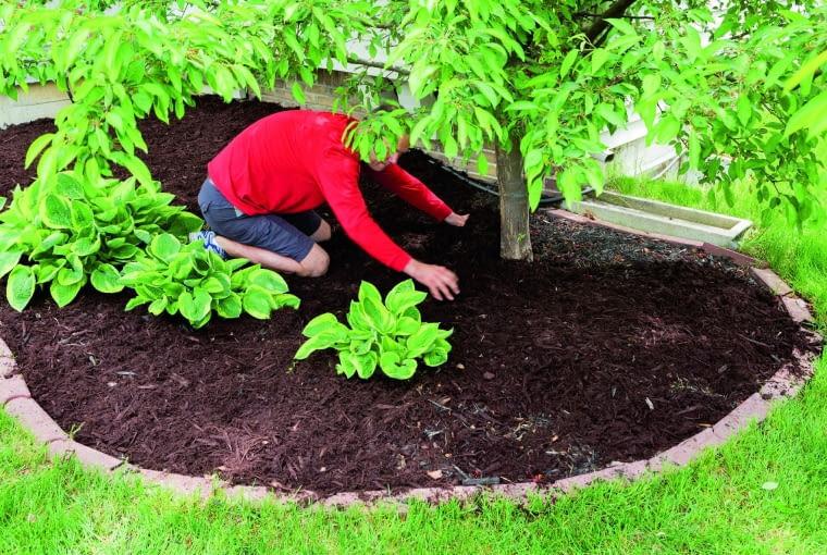 Cienka warstwa dobrze rozłożonego kompostu rozsypana wokół bylin i drzewek wzbogaci glebę w składniki pokarmowe, a także poprawi jej strukturę, zatrzyma więcej wody i ułatwi korzeniom rozrastanie się