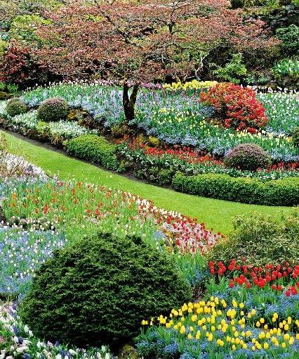 gleba, ogród, ziemia, kwiaty, roślinność