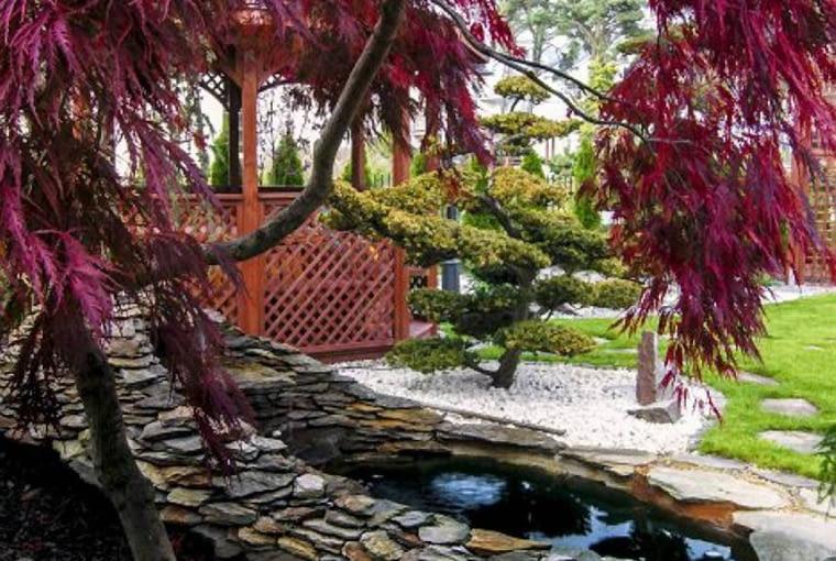 KLON PALMOWY 'GARNET' utrzymuje piękną barwę liści przez cały sezon, a do tego ma oryginalny pokrój. Dorasta do 3 m wysokości, jest dość odporny na mróz.