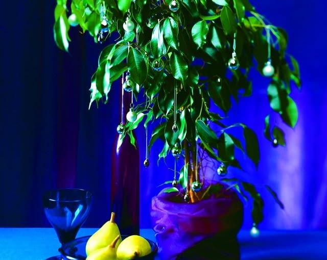 pomysł na choinkę, pomysł na świąteczne drzewko, choinka z figowca