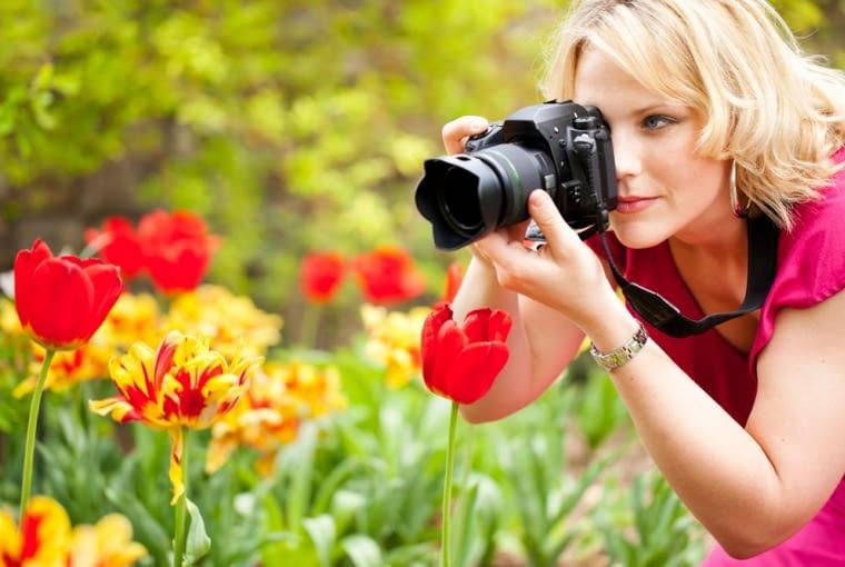 tulipany, ogród, fotografowanie