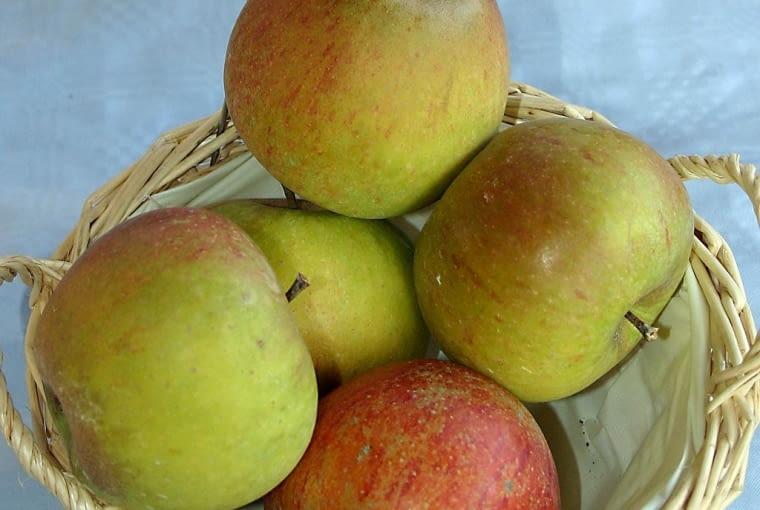 Odmiana późna, odporna na mróz, jabłka sa bardzo smaczne, długo się przechowują