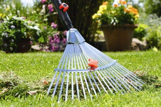 grabienie,grabie,trawnik,pielęgnacja ogrodu,ogród