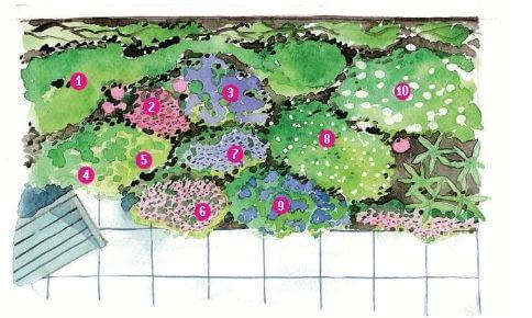 Plan rabaty i nasadzenia: 1. malwa różowa (Alcea rosea) 2. naparstnica lekarska (Digitalis purpurea) 3. farbownik lazurowy (Anchusa azurea) 'Loddon Royalist' 4. chaber górski (Centaurea montana) 5. czosnek Krzysztofa (Allium christophii) 6. mydlnica (Saponaria) 7. szałwia łąkowa (Salvia pratensis), odmiana fioletowa 8. szałwia łąkowa (Salvia pratensis), odmiana biała 9. szałwia lekarska (Salvia officinalis) 'Purpurascens' 10. wieczornik damski (Hesperis matronalis)
