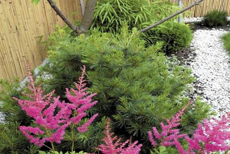 Aranżacje ogrodów. Mały ogród w stylu orientalnym. Tawułka Arendsa i lawenda wnoszą do ogrodu kolor i lekkość.