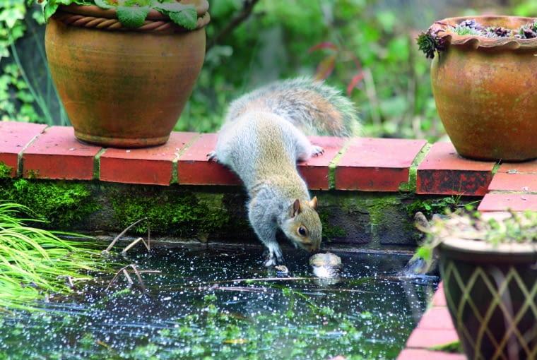 Woda pomaga przetrwać upały zwierzakom - domowym i dzikim.