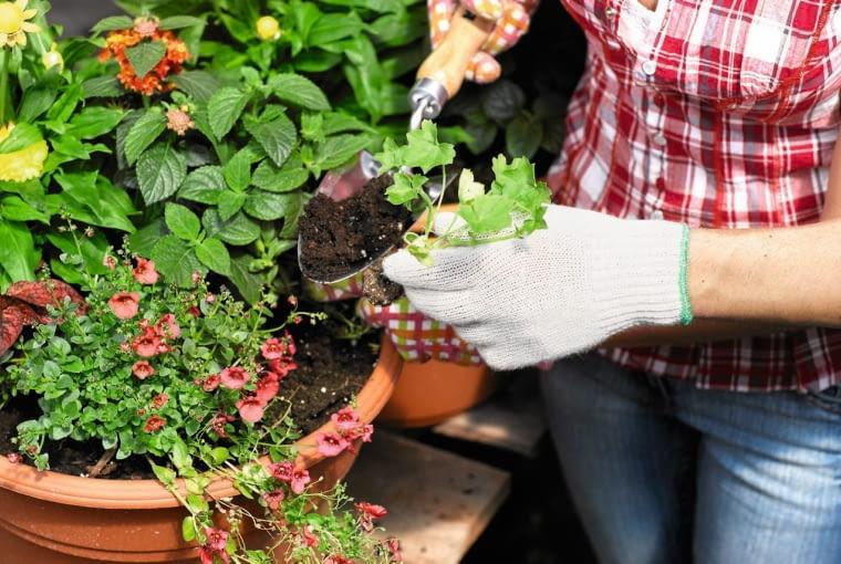 Komponując kwiaty w pojemniku, dobieramy gatunki o podobnych wymaganiach co do światła i podłoża.