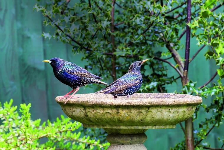 Dzięki poidełkom nasz ogród stale będzie pełen ptasiego świergotu.