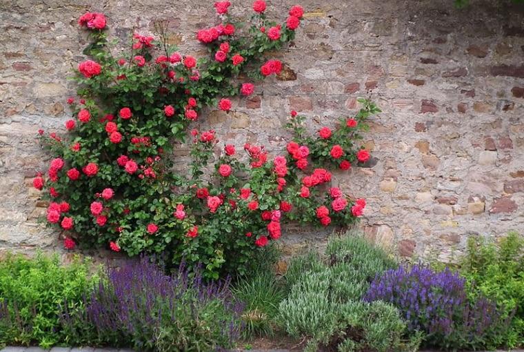 Rabata z lawendą, różami i szałwią omszoną