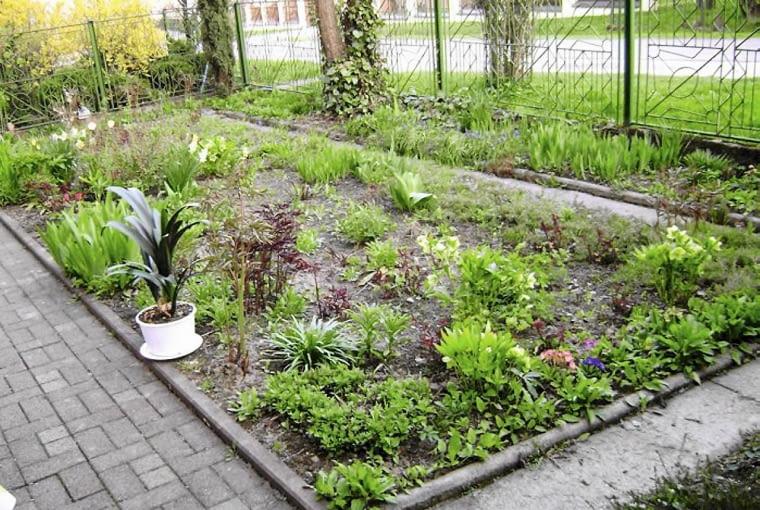 Ogród przed zmianami