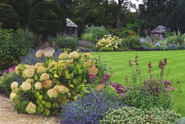 ROZŁOŻYSTE OKAZY BARBULI jeszcze w październiku zdobią ogród niebieskimi kwiatami. Tu rosną w sąsiedztwie hortensji drzewiastej 'Anabelle', penstemona 'Rich Ruby' i rozchodnika 'Matrona'.