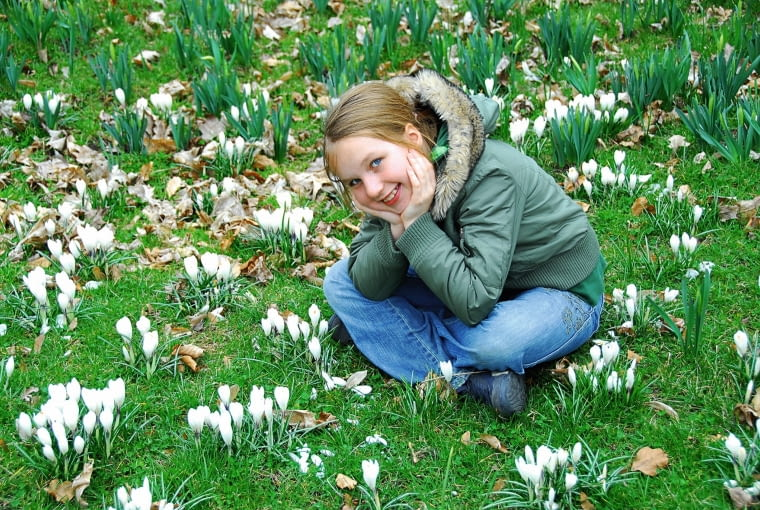 Krokusy (Crocus) rozwijają kwiaty nawet w śniegu: biała odmiana posadzona w skupiskach na trawniku.