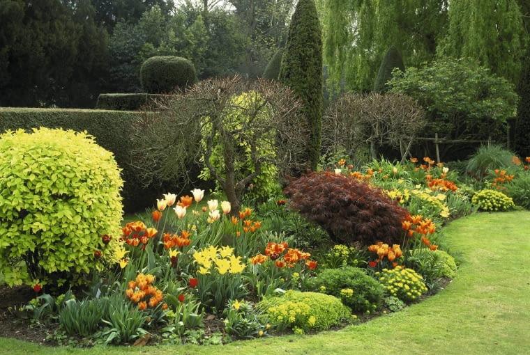 spring border with philadelphus aureus (mock orange) acer palmatum (maple) tulipa (tulip), prinses irene , ballerina , westpoint , abu hassam ,and aleppo, euphorbia polychroma (spurge).