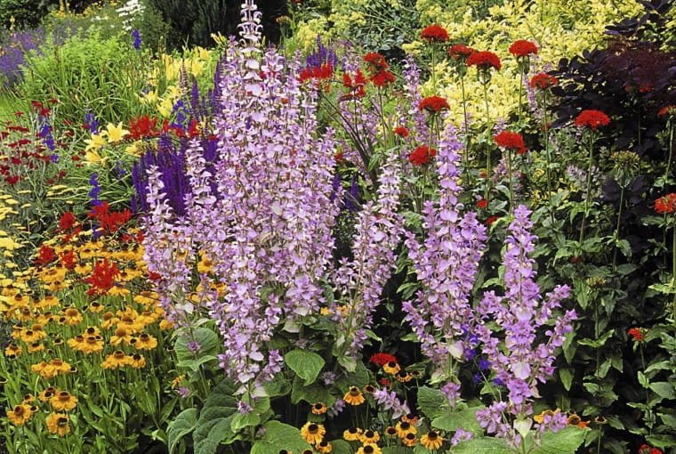 Mixed border with clary sage (Salvia sclarea var. turkestanica), sneezeweed (Helenium), and Jerusalem Cross (Lychnis chalcedonica), June