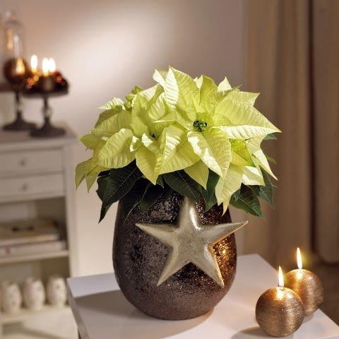 Ozdoby i dekoracje świąteczne na Boże Narodzenie. Stroik z gwiazdą betlejemską