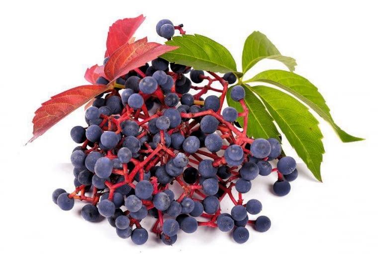 Winobluszcz pięciolistkowy - owoce
