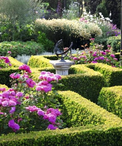 Rosa 'Melrose' in Buxus- Box parterre with sundial