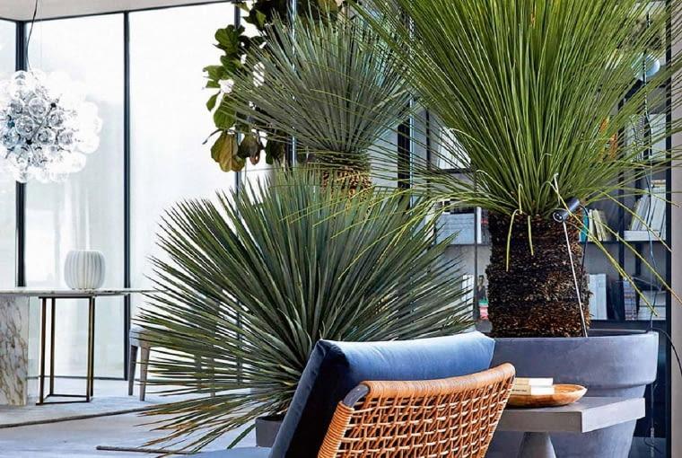 Pod palmą. Fotel Zoe znajnowszej kolekcji Blend marki Meridiani. Elegancki, rozłożysty isuper wygodny. Boki itył zplecionki wykończonej wskórze lub wsztucznym tworzywie. meridiani.it