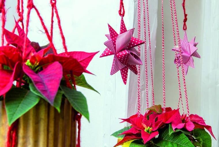 Małe rośliny mogą być wielką ozdobą. Na taką dekorację nadają się też ścięte gałązki poinsecji.