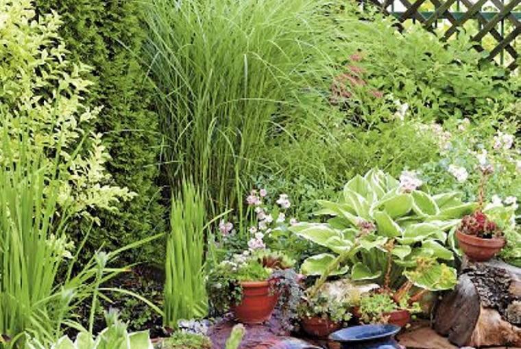 Aranżacje ogrodów. Mały ogród w kwiatach. Nastrojowy zakątek ze źródełkiem wypływającym z dwóch dzbanów