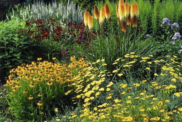 Rabata w kolorach słońca. Zółte kwiaty