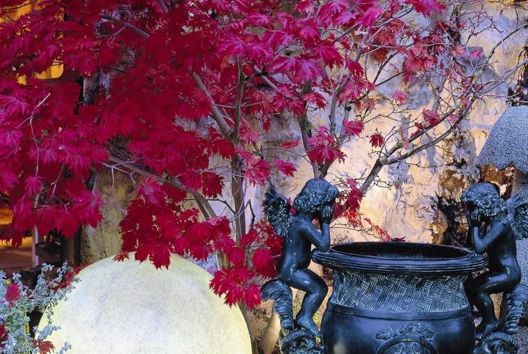 Leuchtkugel als Gartenlicht Fa. Schleitzer-Erlebnisgarten, Tel.: 089/ 89 28 65-0 SLOWA KLUCZOWE: GAP hoch 000 Acer Acer palmatum Garten Terrasse Licht Lampe Herbst Geh^lze Laubgeh^lze Kugel Abend Leuchtkugel Gartenlicht Laterne drau?en