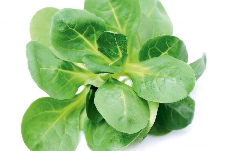Roszponka, spokrewniona zkozłkiem (walerianą), tworzy rozetki liści osmaku twardszej sałaty. Zawierają one wiele cennych związków. Najlepiej jeść je na surowo. Nie miękną tak szybko jak sałata iwlodówce mogą leżeć 10 dni.