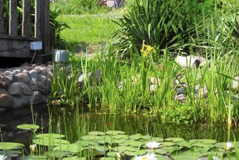 Akwen ten sprawia wrażenie naturalnego dzięki roślinom: irysom, sitowiu i nenufarom